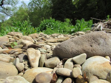 A stream bed among the rocks.