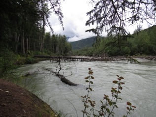 Chilkoot River - Photo by Deia DeMarco